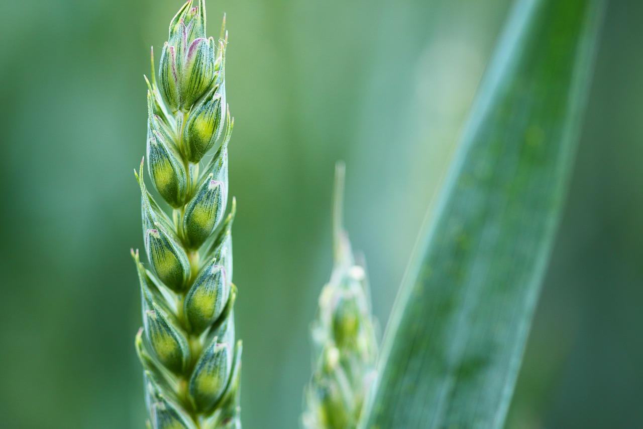 【農家が語る】農業で独立しようと考えている人に言いたい